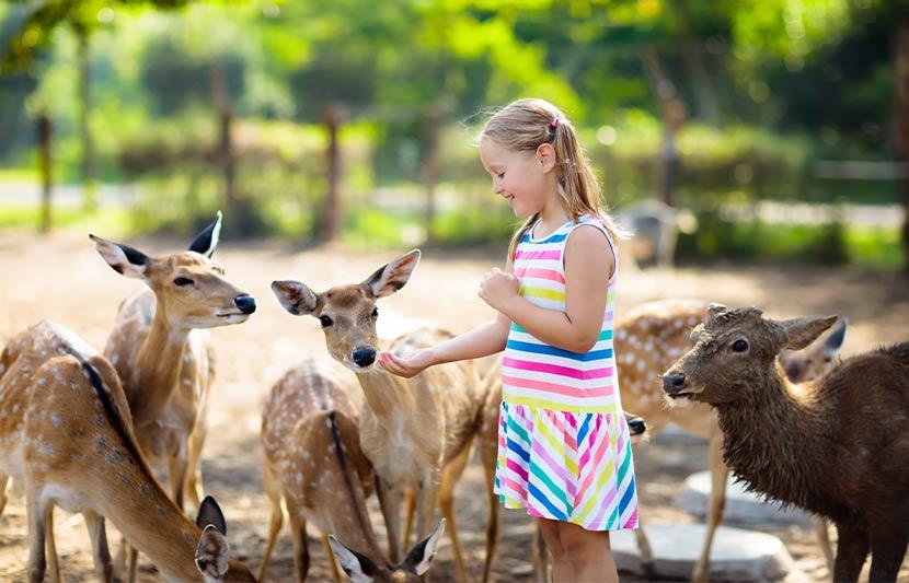 Ein Mädchen, das Rehe aus ihrer Hand füttert. Tierpark Oberösterreich