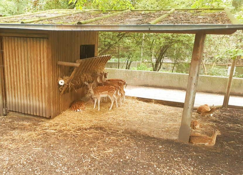 Tierpark Oberösterreich