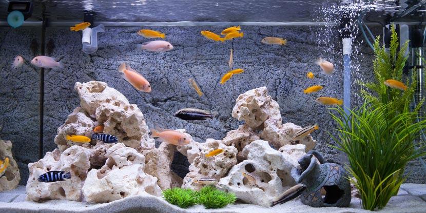 ein beleuchtetes Aquarium mit Fischen, Dekoration und Wasserpflanzen
