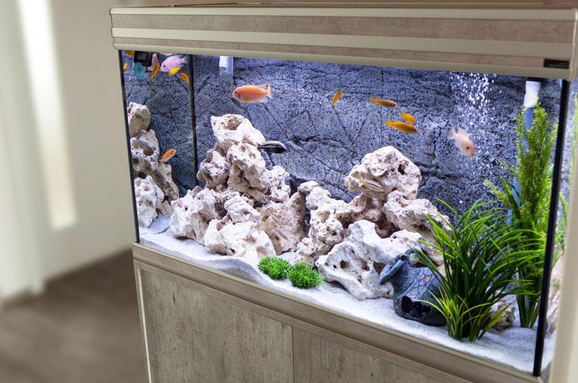 Ein hell beleuchtetes Aquarium in einem passenden Unterschrank.