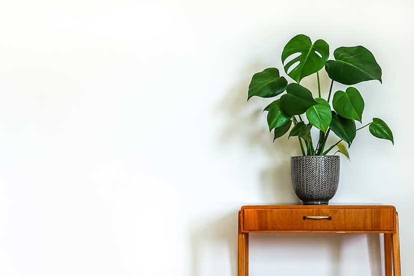 Luftreinigende Pflanzen Top 10 Für Weniger Schadstoffe Heroldat