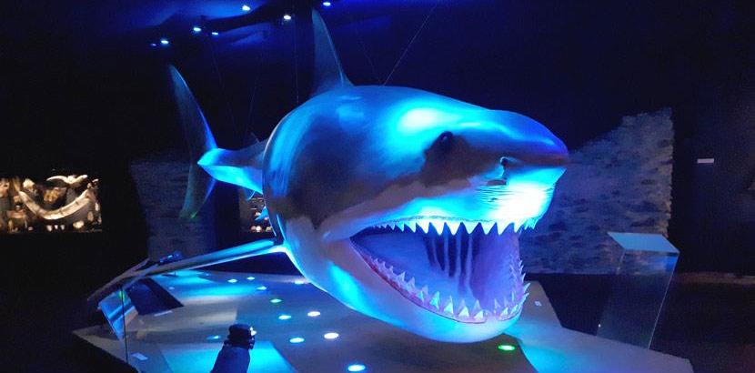 Ein lebensgroßes Modell von einem Hai. Schlechtwetterprogramm Linz