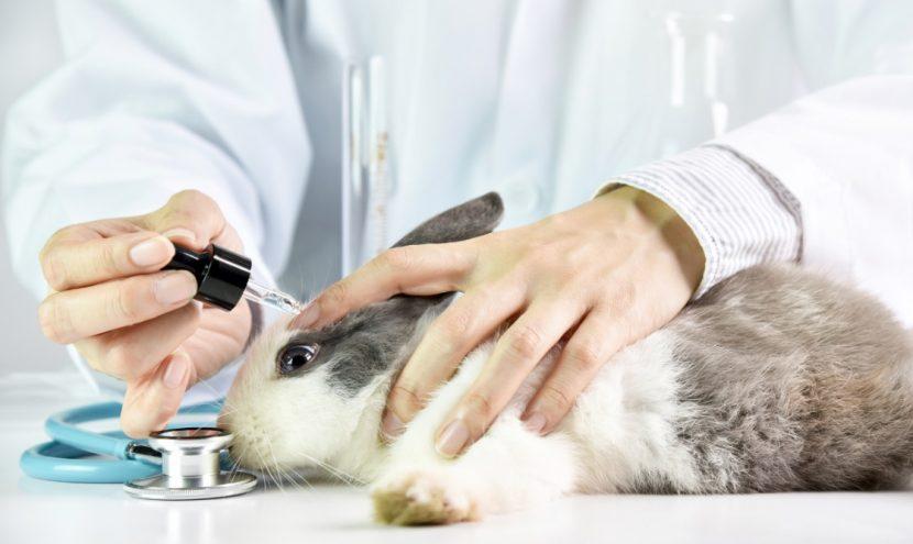Tierversuchsfreie Kosmetik, vegane Kosmetik hat immer mehr Anhänger