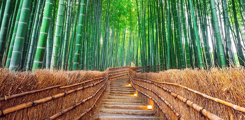 Ein grüner Bambuswald in dem Bambus für Bambusparkett wächst. Durch den Bambuswald führt ein traditioneller Weg aus braunem Bambus.
