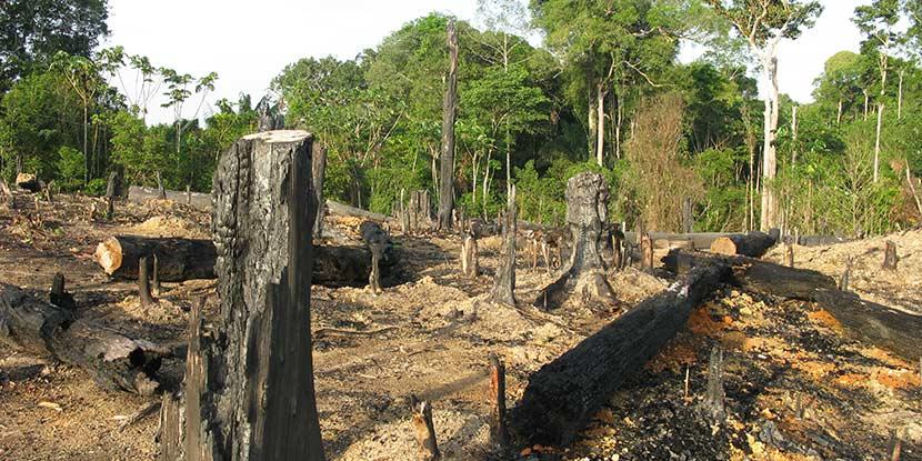 Abgeholzter Regenwald zur Gewinnung von Tropenholz für Terrassenholz