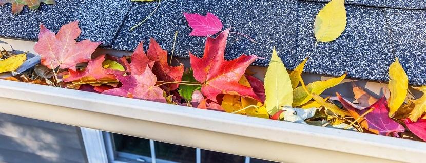 Dachrinnenreinigung bei Dachrinne mit bunten Blättern
