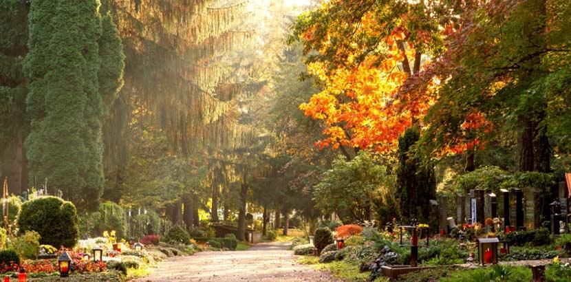 Wunderschöner Waldfriedhof mit alten Bäumen im Hintergrund und Gräbern im Vordergrund in der Herbstsonne. Feuerbestattung Kosten Wien.
