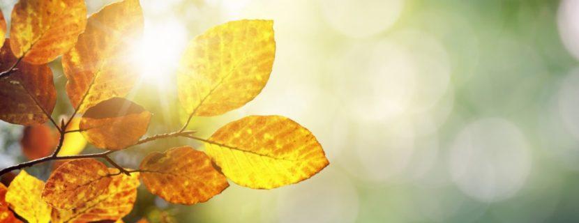 Bunte Blätter, durch die von hinten die Sonne scheint. Todesfall Checkliste Österreich.