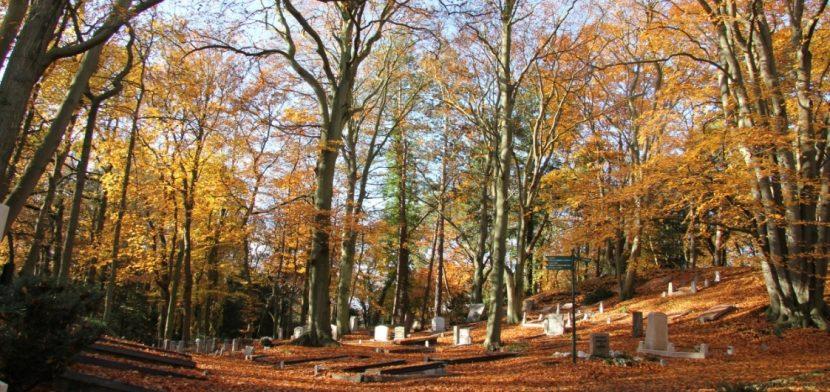 Naturbestattungen finden häufig auf sogenannten Waldfriedhöfen statt.