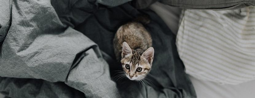 kleine Katze auf grauer Decke