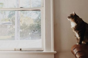 Fenster putzen lassen Kosten: Eine Katze sitzt auf einem Ledersofa und schaut durch ein schmutziges Fenster.