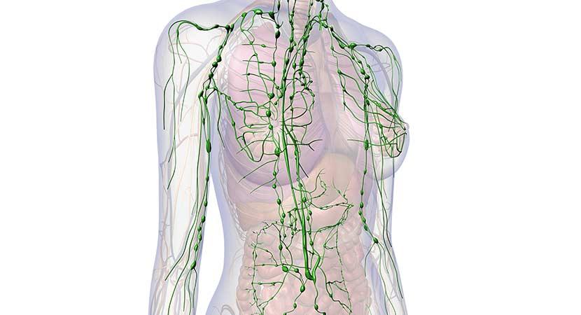 Lymphdrainage - Lymphsystem im Körper
