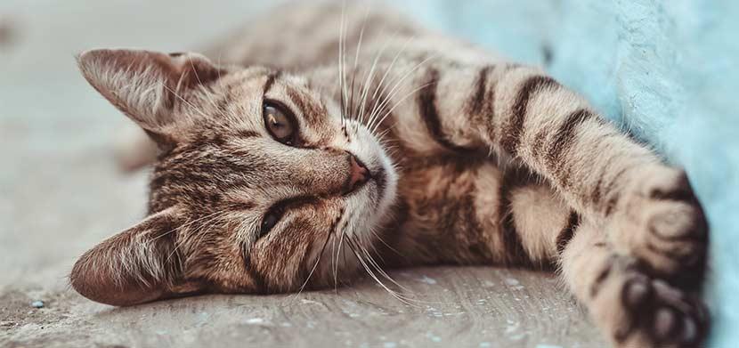 Katze frisst nicht