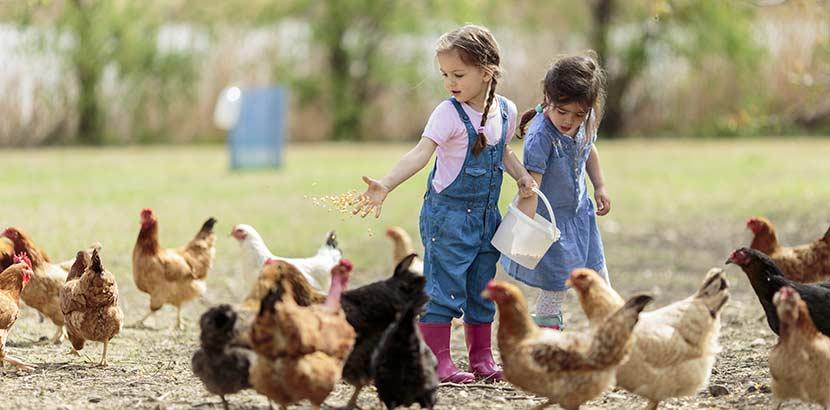Kinder füttern Hühner während Urlaub am Bauernhof