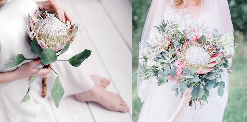 Zwei verschiedene Bräute mit einem Brautstrauß mit je einer großen Zuckerbusch-Blüte.