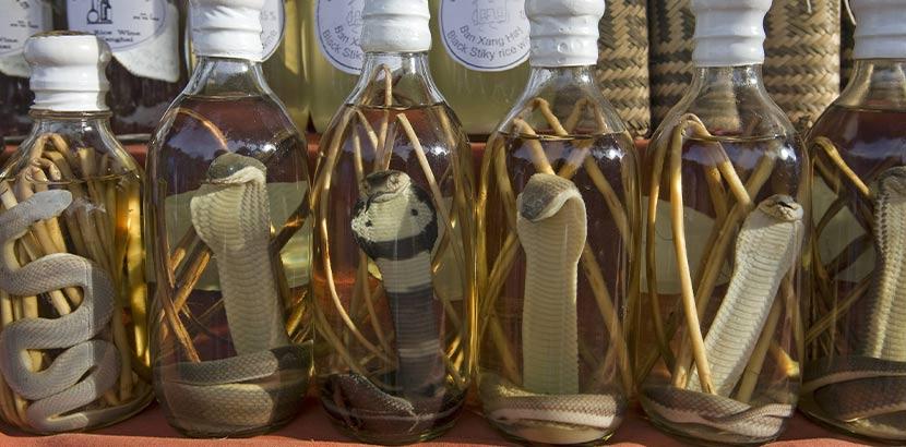 Ginflaschen mit echten Schlangen drin. Geschenk für Papa.