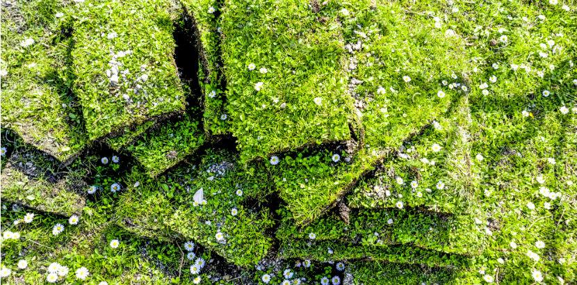 Rasen: Fertigrasen