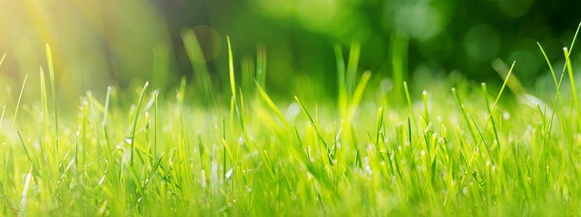 Grüner Rasen im Garten