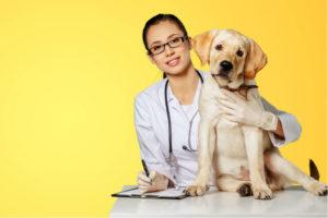 Tierärztin mit Hund vor gelbem Hintergrund.