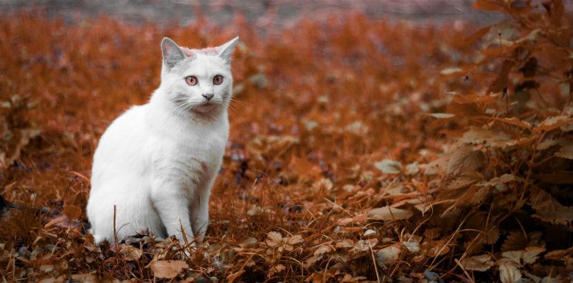 Tierarzt Linz: Eine weiße Katze.