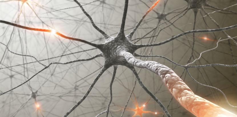 Neurologe Graz: Nervenzellen mit elektrischen Impulsen