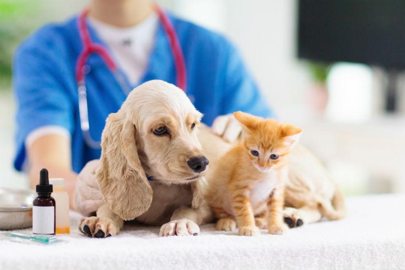 Tierarzt Klagenfurt: Katze und Hund auf einen Blick.