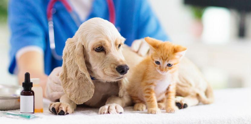 Tierarzt Graz: Katze und Hund auf einen Blick.