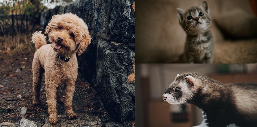 Heimtierausweis für Hund, Katze und Frettchen