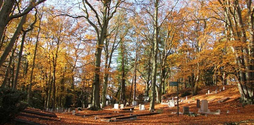 Waldfriedhof im Herbst. Baumbestattung Österreich.