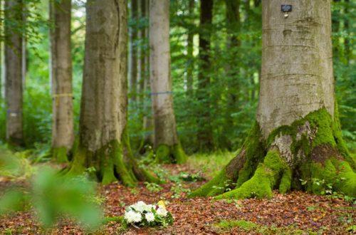 Gesteck aus weißen Rosen in einem Waldstück. Baumbestattung Österreich.