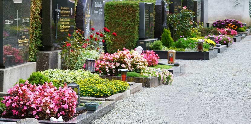 Reihe von Gräbern mit buntem Blumenschmuck am Friedhof. Bestatter Wien.