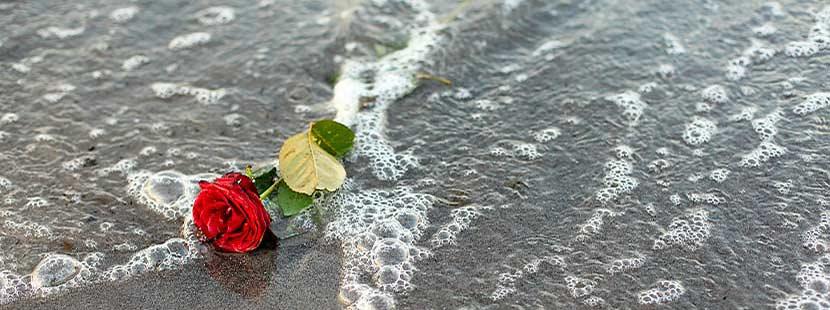 Rose am Meeresstrand als Symbol einer Seebestattung.