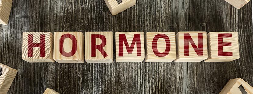 Bauklötze die das Wort Hormone bilden. Endokrinologe Graz.