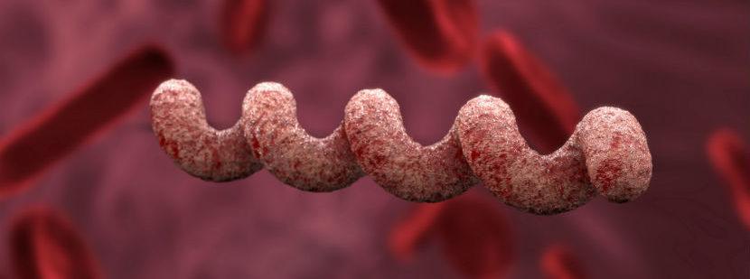 Syphilis Test: das Bakterium Treponema pallidum
