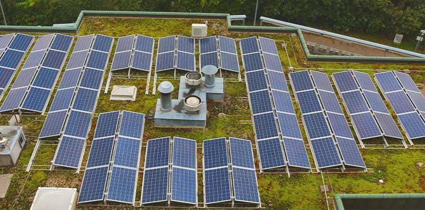 Eine Reihe an Solarzellen und Photovoltaik Anlagen auf einem begrünten Flachdach.