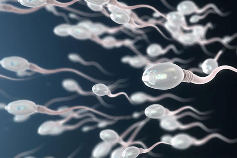 Sperma testen Wien