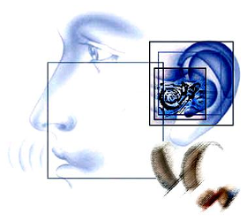 Hören - Hörstörungen - Hörgesundheit