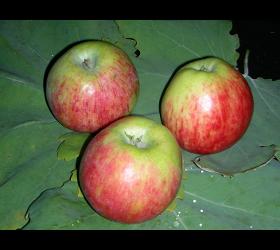 Bio Apfelsaft naturtrüb