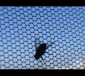 Insektenschutz - Giselbrecht Andreas