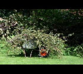 Frühjahr/Herbst Gartenservice Wien 1230