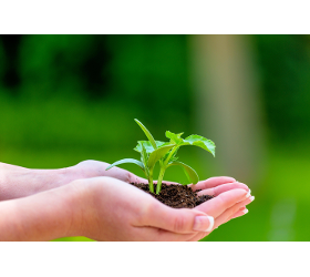 Pflanzarbeiten 1230 Wien planen und durchführen