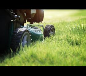 Rasen planen und pflegen in Wien