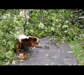 Sofort Baumnotdienst bei Sturmschäden 1230 Wien
