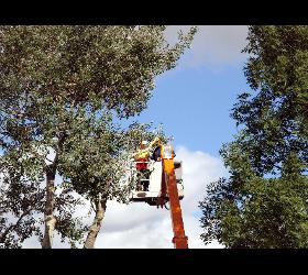 Baumabtragung