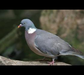Vogelschutz/Taubenabwehr