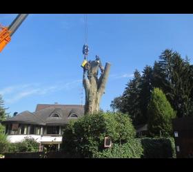 Sachverständige f. Baumpflege  GEHÖLZ Christoph Ölz