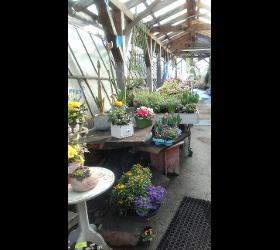 Herbstblumen Gärtnerei