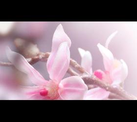 Eaux de Parfum Kollektionss funkeln, intensiv und ausdrucksst