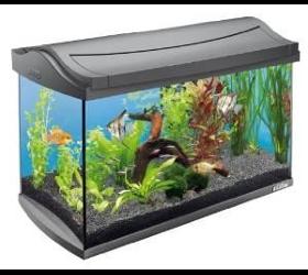 Aquarium Fischifisch