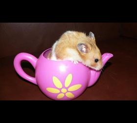 Teekanne für Hamster